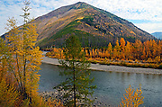 Fall colors along the North Fork Flathead River 14 years after the Moose Fire. North Fork Flathead River Valley, northwest Montana.