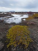 Landscape photos taken in Northeast Iceland (Norðausturland).