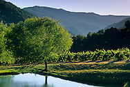 Tree and pond, Galante Vineyards, above Carmel Valley, Monterey County, California