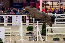 098, Lalinno Di Magico Res Nova Z<br /> BWP Hengstenkeuring -  Lier 2020<br /> © Hippo Foto - Dirk Caremans<br />  17/01/2020