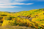 Mixedwood forest in autumn color along the Peace River<br /> Dunvegan<br /> Alberta<br /> Canada