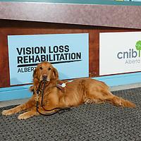 2018_02_01 - CNIB Calgary Commercial Photography