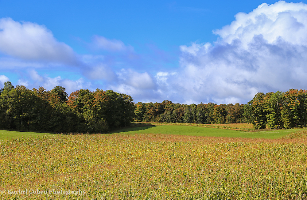 &quot;Heartland Harvest&quot; <br />
