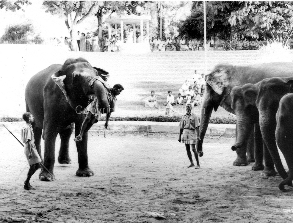 Peter Tennant Collection. Colombo (Dehiwala) Zoo. c. 1959