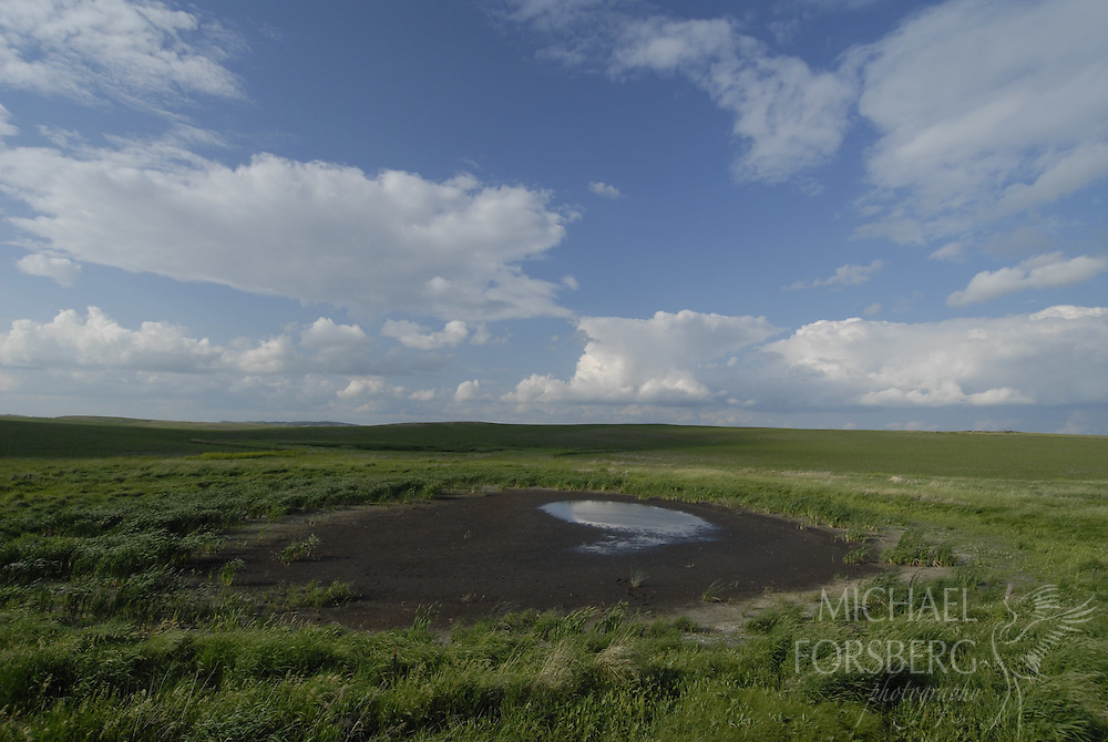 Prairie pothole region - Missouri coteau..Prairie pothole drying up in a prairie grassland...Kidder County North Dakota.