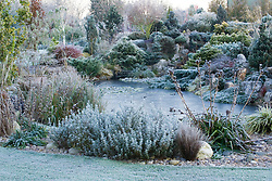 The rock garden and frozen pond in John Massey's garden on a frosty winter's morning. Design: John Massey, Ashwood Nurseries