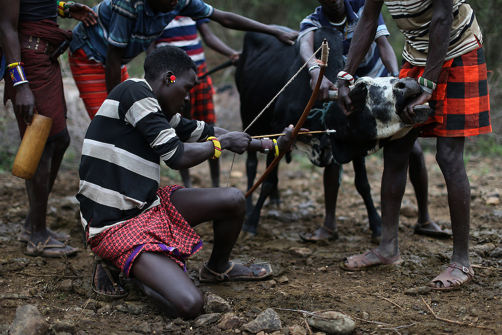 Young Pokot men restrain a bull as another prepares to shoot an arrow with a shallow point in its next to extract blood, during an initiation ceremony of young men in order to become recognised adults within their community, about 80 Kilometres from the town of Marigat, in Baringo County, Kenya, January 20, 2016.