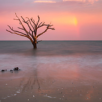 Lone remaining tree at Boneyard Beach on Botany Bay, Edisto Island, SC