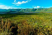 Parc de la Riviere-Bleue (Blue River Provincial Park), Province Sud (Great South Region), Grand Terre (main island), New Caledonia