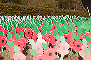 Memorial Poppies at the National Memorial Arboretum, Croxall Road, Alrewas, Burton-On-Trent,  Staffordshire, on 29 October 2018. Picture by Mick Haynes.