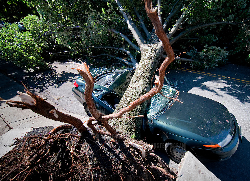 July 26, 2010 - Bronx, NY : A massive tree crushes a green saturn, parked on Orloff Avenue near Van Cortlandt Park West in Kingsbridge Heights on Monday morning. The aftermath of the July 25 storm, which wreaked havoc on North Riverdale. Photos by Karsten Moran / The Riverdale Press
