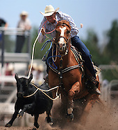 Competitor during the Tie-Down Roping event, 25 Jul 2007, Cheyenne Frontier Days
