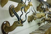 AFrica Museum Tervuren laatste dag van de vakantie met speciale activiteiten.Bezoek aan de opslag kelders mogelijk ihkv de expo UNCENSORED, voor de grote verbouwing van het museum begint.