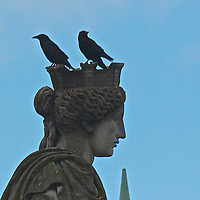 The Lady and the Birds