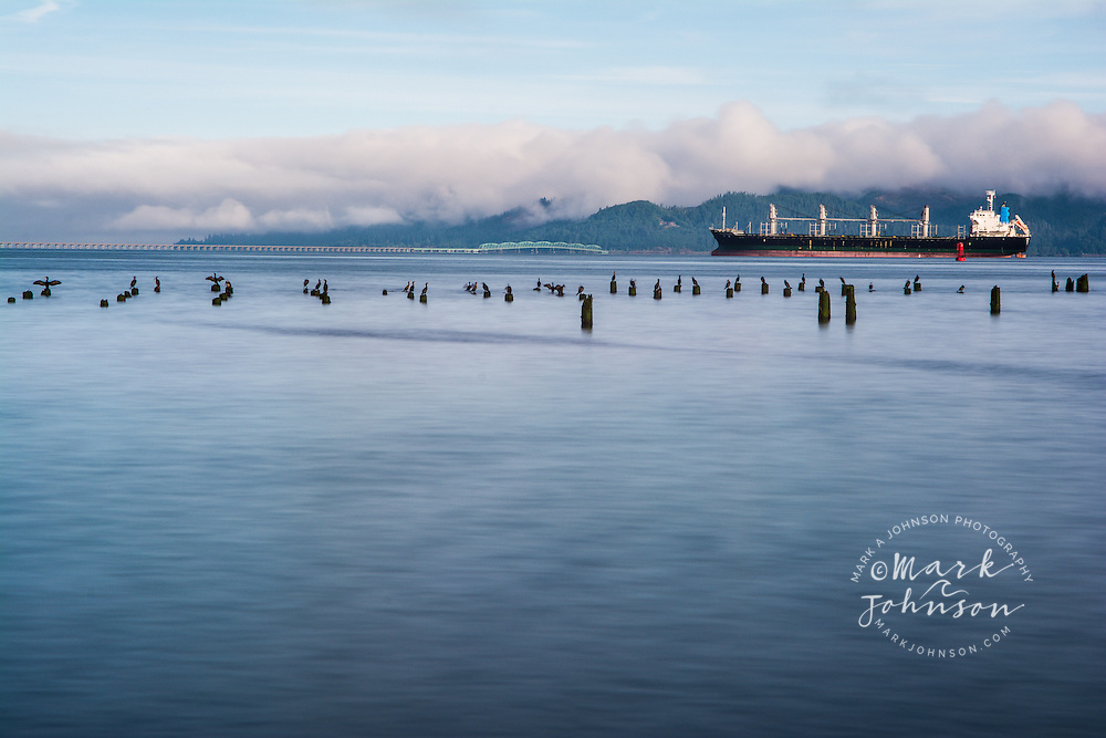 Cormorants perched on old pilings, container ship anchored in background, Columbia River, Astoria, Oregon, USA