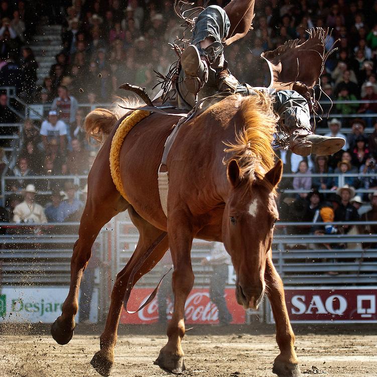 La monte de cheval sauvage sans selle.