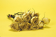 Still life of dried yellow roses