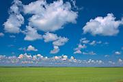Peas and clouds<br />Oyen<br />Alberta<br />Canada