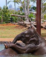Baby elephants at Taronga Zoo
