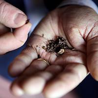 Nederland,Amsterdam, 5 maart 2015.<br /> Philipp Kauffmann, Chief Grower, OriginalBeans<br /> One Bar : One Tree<br /> Foto:Jean-Pierre Jans
