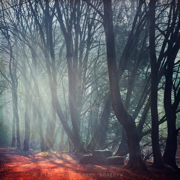 Morning light and fog in a german forest with a resting area - texturized photograph<br /> Licenses: http://www.trevillion.com/search/preview/sunlit-autumnal-forest/0_00203879.html
