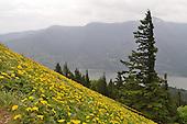 20120520 Day Hike Up Dog Mountain, Columbia River Gorge, Washington