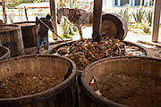 A worker rotates piles of roasted blue agave mash in the mill at an artisanal Mezcal distillery November 5, 2014 in Matatlan, Mexico. Making Mezcal involves roasting the blue agave, crushing it and then fermenting the liquid.