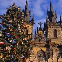 Europe, Czech Republic; Prague. Christmas tree and Our Lady before Tyn cathedral.
