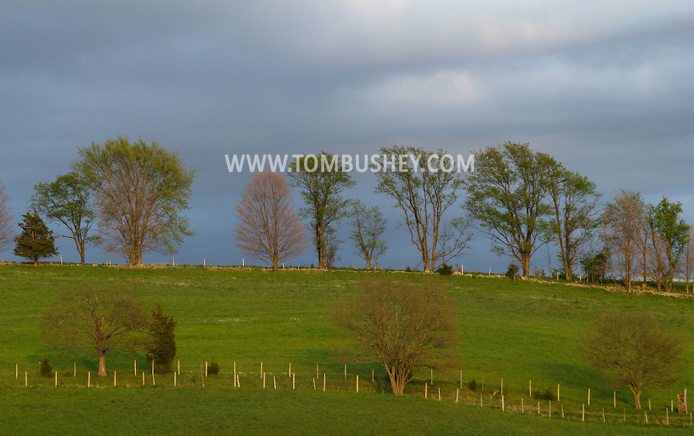 Chester, New York - The setting sun shines on rows of trees at Brookview Farm on April 20, 2012.