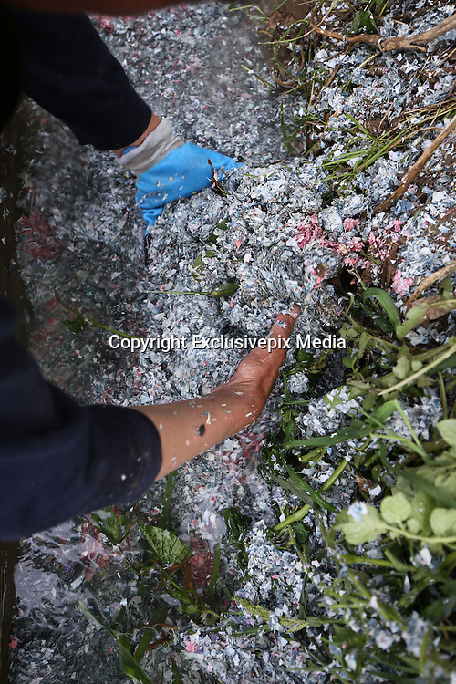 KUNMING, CHINA - AUGUST 11: <br /> <br /> A crew handles pieces of banknotes found near a flea market on East Third Ring on August 11, 2016 in Kunming, Yunnan Province of China. A reporter received news about damaged banknotes thrown away along road and local bank crews have rushed to deal with them. <br /> ©Exclusivepix Media