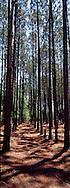 Pine Forest, Baxley, Georgia