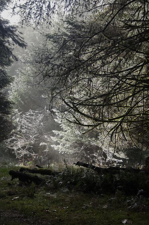 Sunlit Frost, Prevost Island, Gulf Islands National Park Preserve, British Columbia, Canada