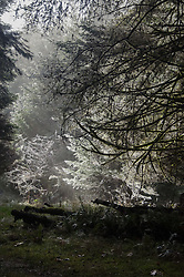 Sunlit Frost, Prevost Island, Gulf Islands National Park Preserve, British Columbia, Canada