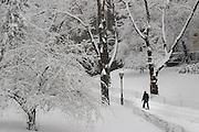 A man walks through Central Park during a dense snowfall in February. Photo by Natalie Fertig/NYCity Photo Wire