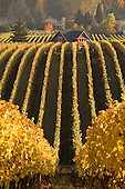 Sokol Blosser winery image library example