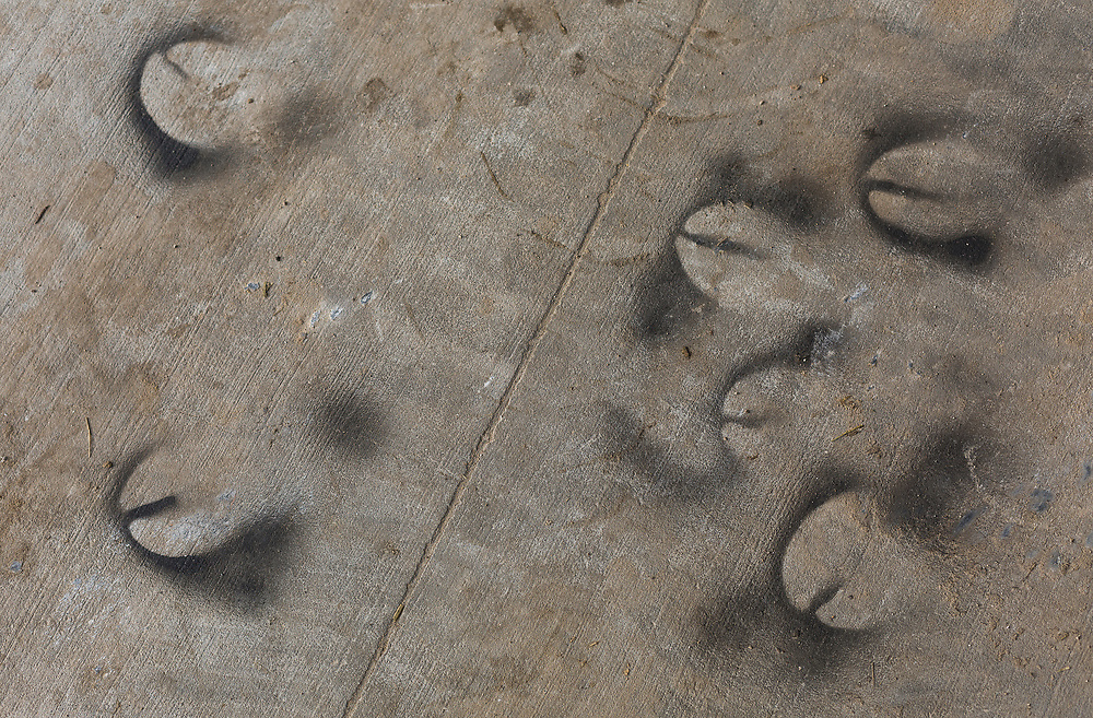 Hoofed spray paint outlines are left on the concrete during the World Dairy Expo in Madison, Wisconsin, U.S., October 3, 2018.  REUTERS/Ben Brewer