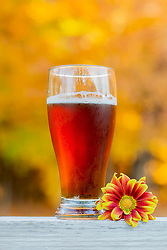 A Cold October Brew And A Little Daisy For Autumn Color