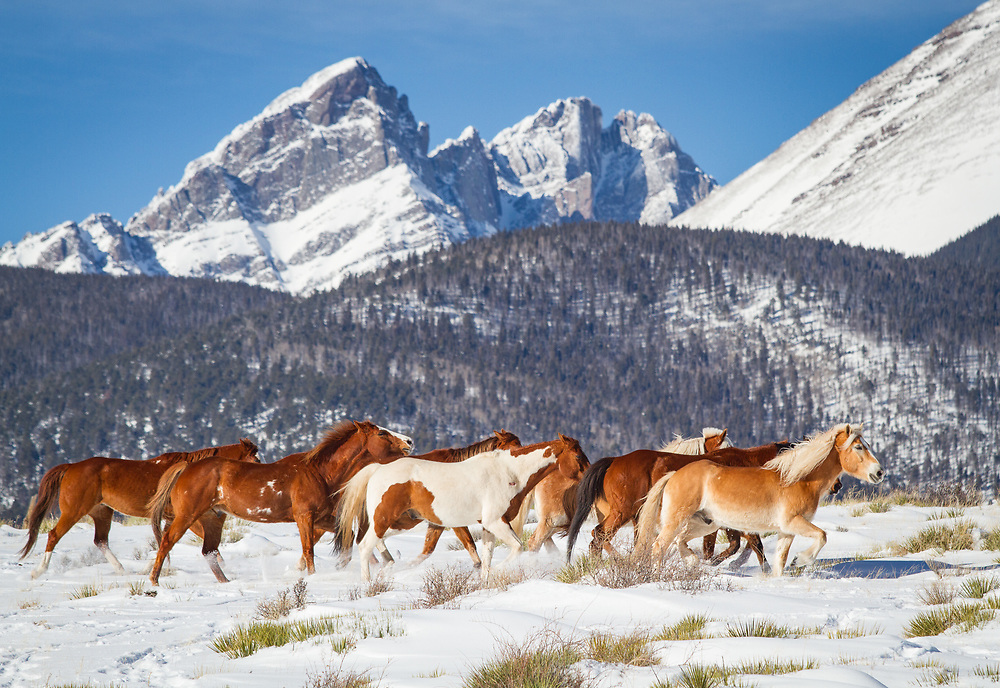 Photographers gather for the opportunity to photograph horses running in the snow at Music Meadows Ranch.