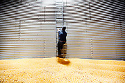 Grain elevator operator Bill Cummins inside a silo full of corn ready to be shipped out. The grain is in storage awaiting a better commodity price.