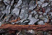 Eroding Shale Rock and Driftwood, Holbrook Island Sanctuary, Brooksville, Maine, US