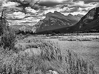 Vermillion Lakes, bullrushes growing alongside wetlands and view to Mount Rundle, Banff National park, Alberta, Canada   Photo: Peter Llewellyn