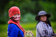 The Rice Fields in Nakhon Nayok, Thailand PHOTO BY LEE CRAKER