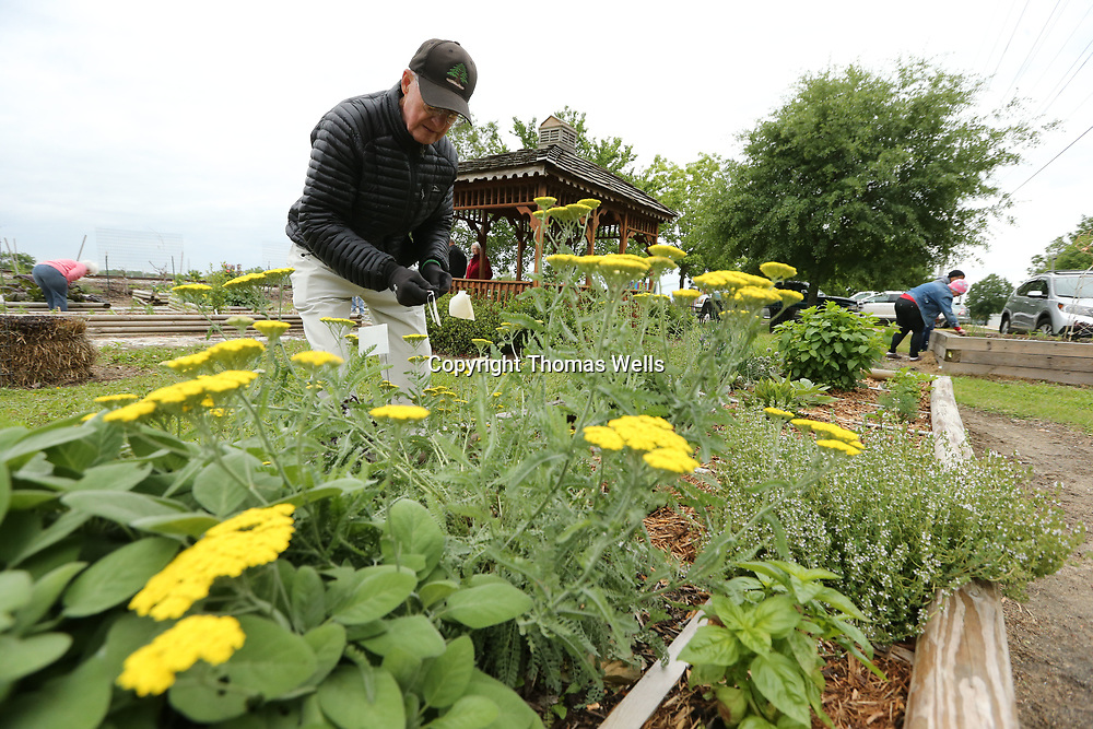 Reggie Rose and several other master gardeners get the community gardeon on Spring Street ready for the Farmers Depot opening for the spring.