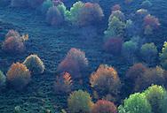 France, Languedoc Roussillon, Gard, Cevennes, vallée de la Dourbie