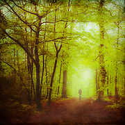 Walking through a vividly green forest in Spring - textured photograph