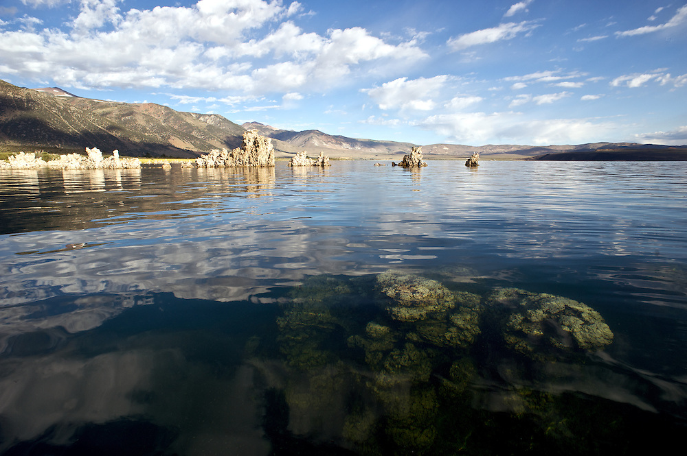 Tufa is a type of limestone that is formed when calcium-rich spring water mixes with the carbonate-rich Mono Lake water and precipitates around the spring. The towers grow underneath the waters surface. These towers were exposed when the city of Los Angeles diverted four of the five streams flowing into Mono Lake.  Deprived of its freshwater sources, the lake volume dropped by half, exposing nesting colonies of gulls to predation and again doubling the lakes salinity. The entire eco-system began to collapse. In response David Gaines formed the Mono Lake Committee, a citizens group that was formed to reverse this trend and save the lake. In 1994 the California Supreme Court mandated that the lake should rise to a level of 6,392 feet, which will partially restore the ecosystem and migratory bird habitat.  <br />