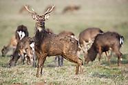 Studley Royal Deer Park - April 2015
