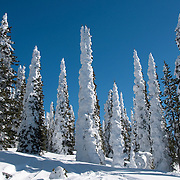 Snow-encrusted pine trees on Two Top Mountain in Idaho.