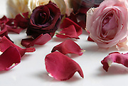 Freeze Dried whole Rose flowers and petals