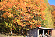 This old woodshed is the focal point of this rather day-dreamy, selective-focus image.